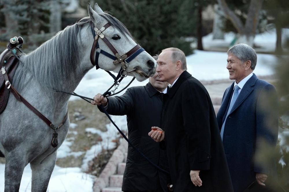 Куда дели лошадь, подаренную Путину? Разбираемся