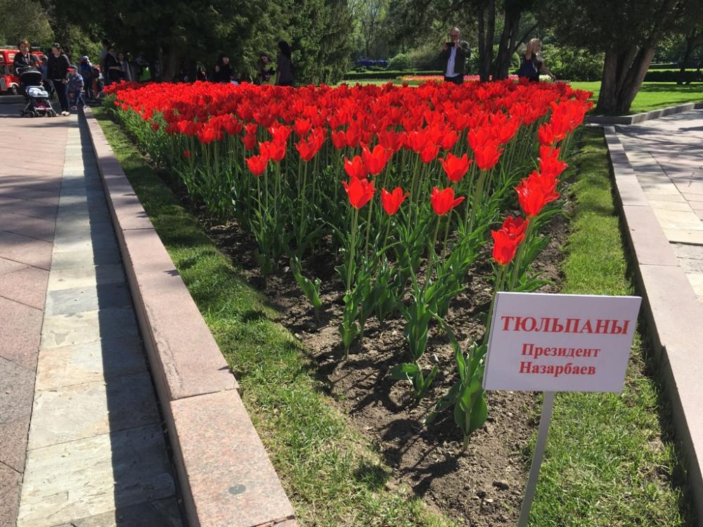 В честь Нурсултана Назарбаева назвали даже цветы