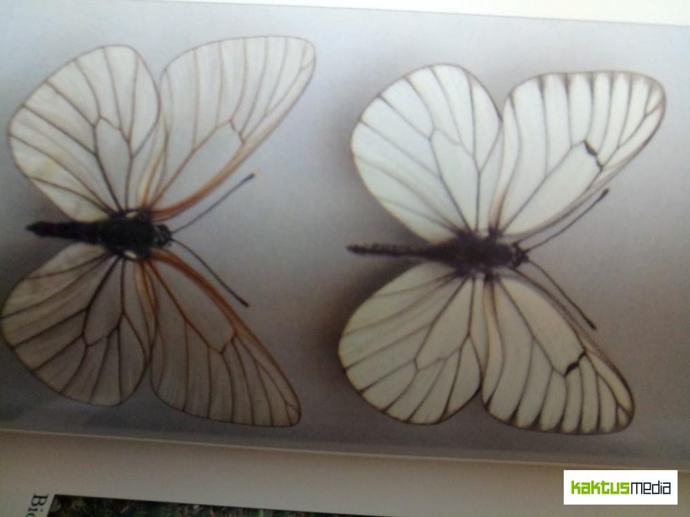 Изменение фауны Бишкека. Какие животные и насекомые сбежали из грязного города