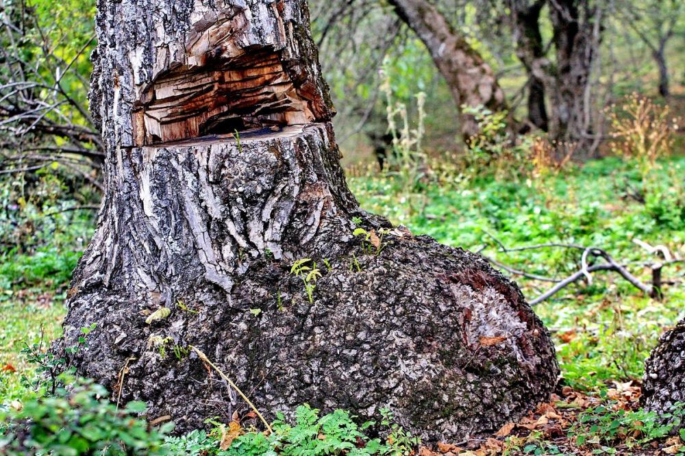 Исчезающий Кыргызстан: Арсланбобские леса уже не смогут восстановиться (фоторепортаж)