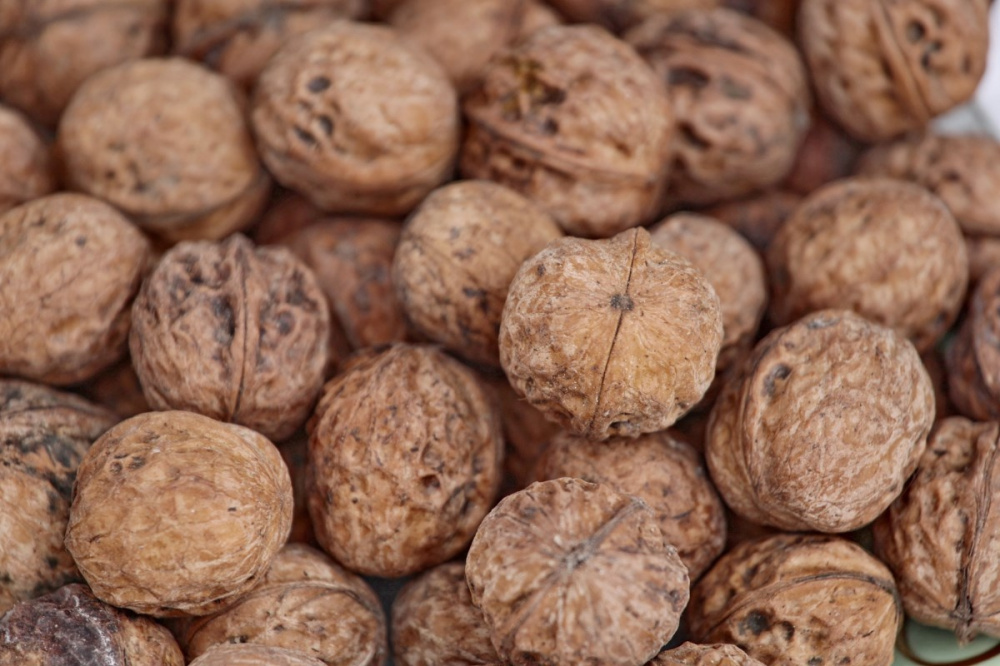 Умирающий лес. Урожай орехов в Арсланбобе собирают без учета воспроизводства