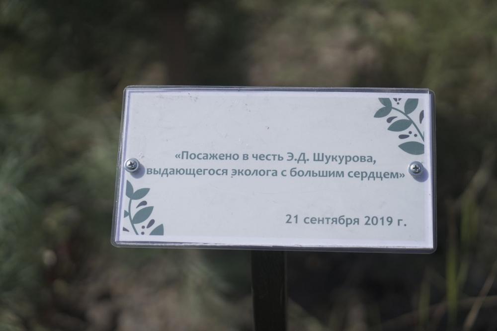 В Карагачевой роще посадили дерево в честь Эмиля Шукурова
