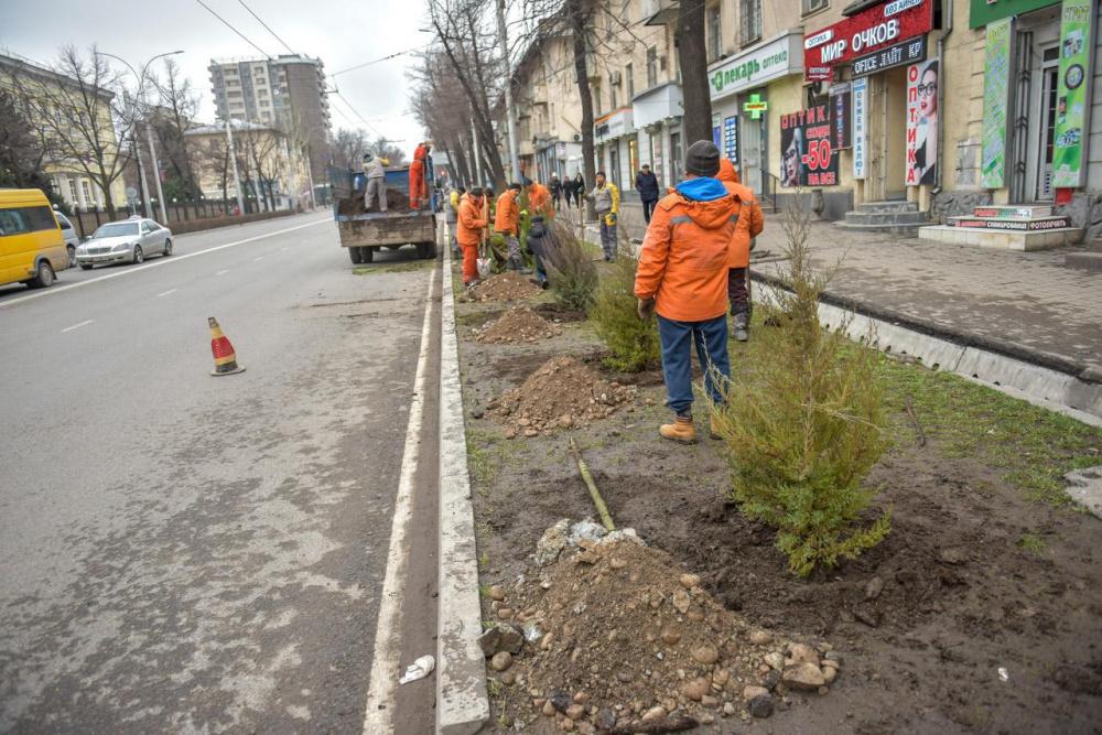 В Бишкеке завершается зимний сезон посадок деревьев